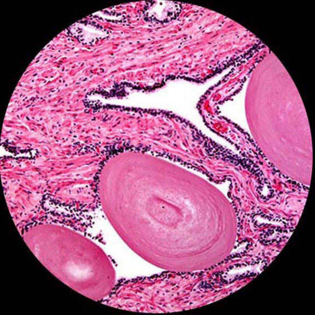 生物显微镜下观察到的细胞
