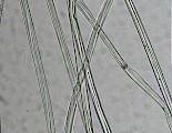 FAS毛麻纤维细度分析系统